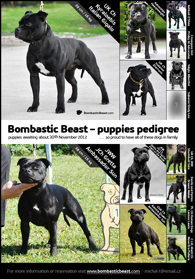 Bombastic Beast puppies pedigree
