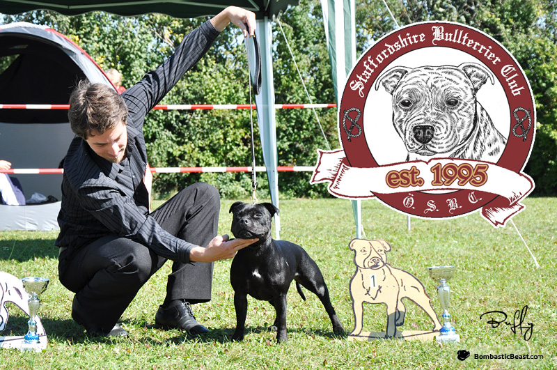 Joe Mallen Memorial 2012 WINNER (Intermediate Class) – JCh. & Club JCh. Gretta Ambassador Sun JWW (Buffy)